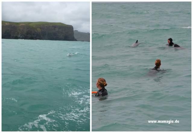 Neuseeland: Akaroa, Schwimmen mit Hektor´s Delfinen