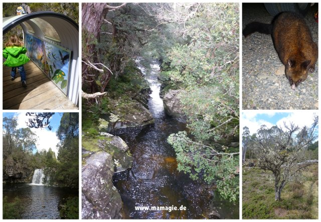 asmanien, Cradle Mountain National Park: Enchanted Forest Walk, Pencil Pine Falls