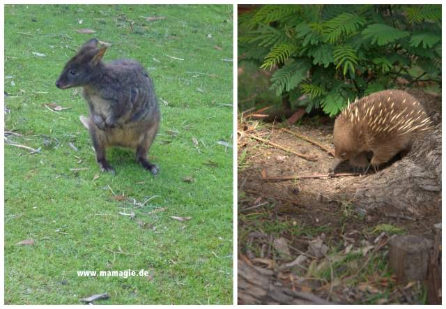 Tiere in Tasmanien
