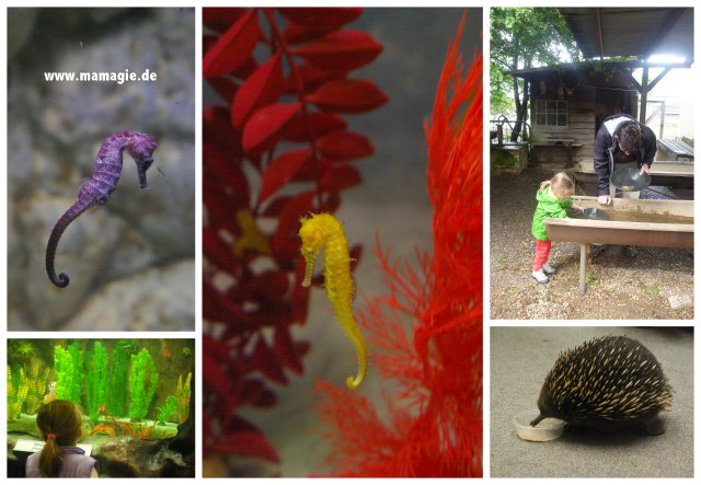 Tasmanien, Beauty Point: Platypus House and Echidna Garden, Seahorse World; Beaconsfild im Mine & Heritage Museum