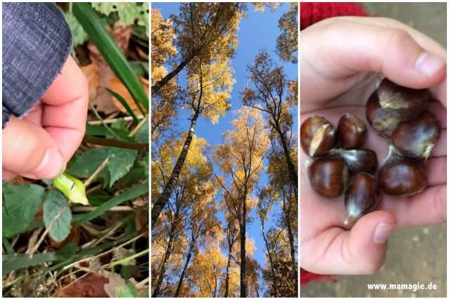 Springkraut, Esskastanien... es gibt für Kinder viel zu entdecken im Wald.