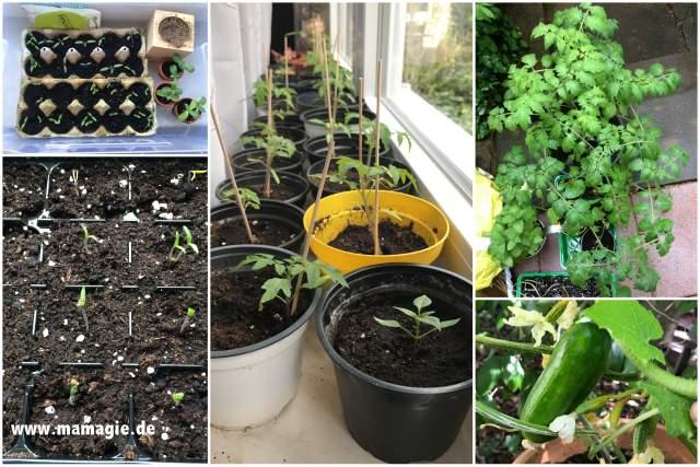 Mit Kindern Gurken und Tomaten säen und ernten