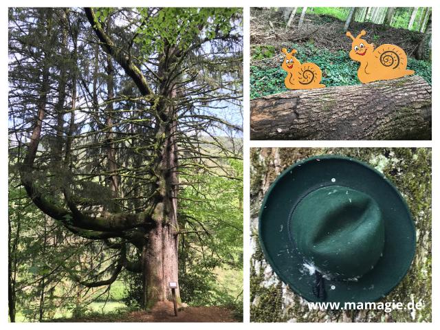 Toller Kinderwanderweg im Schwarzwald
