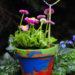 Selbstgemachter Blumengruß zum Muttertag